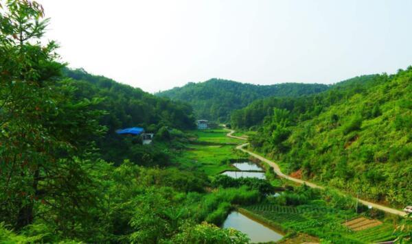 农村创业政府扶持项目是什么?