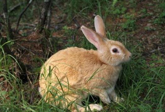 广东一靓仔回村另类养兔,年销50多万