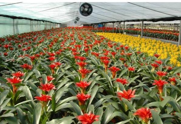 """河北一大学生种植花卉,建造""""最美后花园""""年收入过百万"""